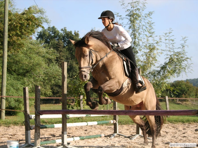 Elevage de double poneys